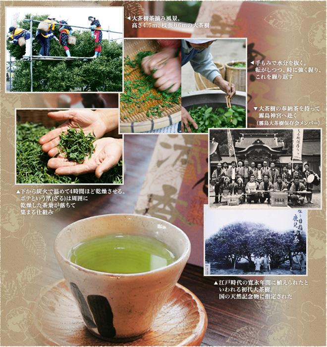 茶摘み、釜炒り、奉納